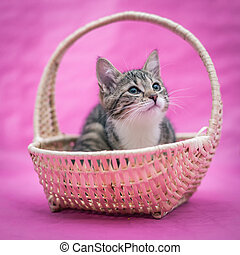 sweetest kittens - in the basket - sweet little kitten...