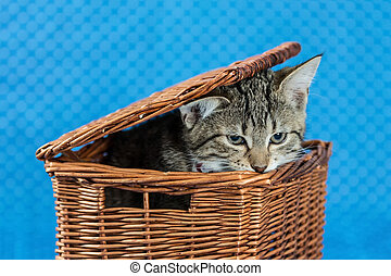 cute little cat looking out basket - little tiger kitten...