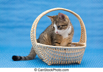 sweetest kittens sitting in basket - little tiger kitten...