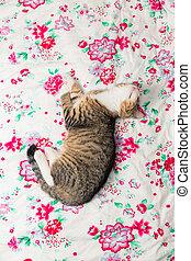 sweetest kittens - deep sleep
