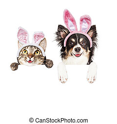 Happy Easter Dog and Cat Over White Banner