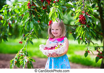 Little girl picking fresh cherry berry in the garden - Kids...