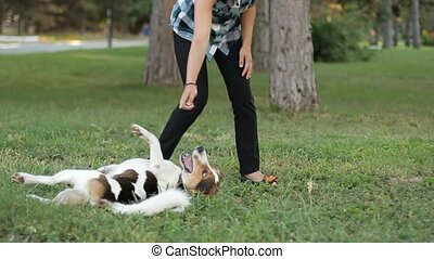 Dog Training - Slow Motion Young girl are trained little dog...