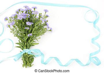 planta perenne, aster, ramo,