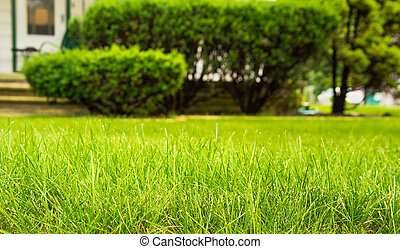 Home Lawncare - Beautiful green full grass in home yard