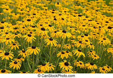 Fence Gardening - Brightly colored summer wild frowers in...