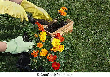 Potting Flowers - Potting flowers in the garden