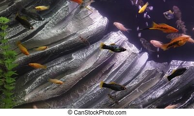 Fish tank underwater - Colorful fish in aquarium tank with...