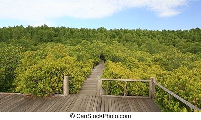 Mangrove forest and wood bridge