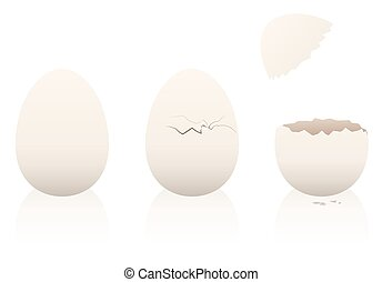 Eggs Intact Broken Open Eggshell - Eggs - one is intact, the...