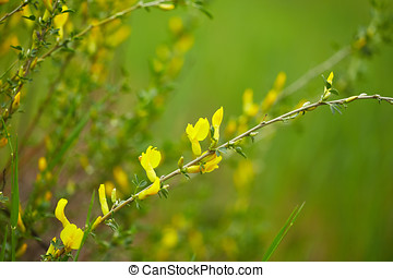 Field flowers - Beautiful yellow field flowers. Nature...