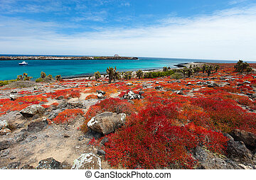 Galapagos island landscape - Beautiful landscape of...