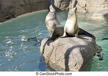 Seals on a rock in a zoo
