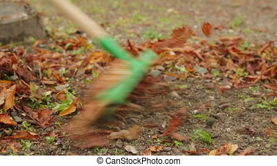 Worker Removing Foliage With Rake - Colorful fall leaves...