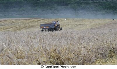 tractor in the field - %u0422ractor in the field on the...
