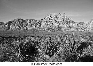 Nevada, arenisca, y, Yuccas,