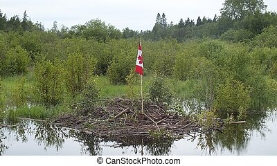 Truly Canadian - A Canadian flag stands planted on a beaver...
