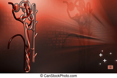 Nephron - Digital illustration of nephron in colour...