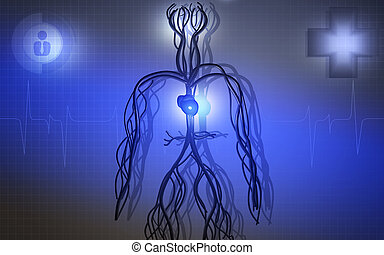 Vascular system - Digital illustration of vascular system in...