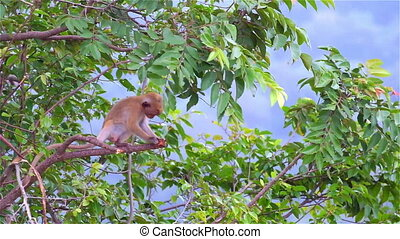 A Baby Monkey Gnawing Tree - Young Baby Monkey Gnawing Tree
