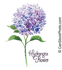 Branch of blue hydrangea. Template of greeting card....