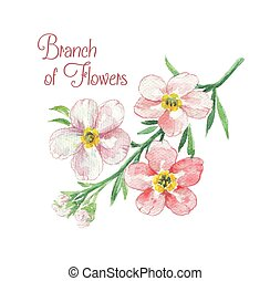 Branch of apple blossom. Template of greeting card....