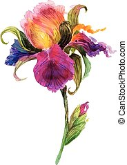 Beautiful watercolor iris flower. Watercolor floral...
