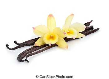 Vanilla pods with two yellow orchids. Isolated on white...