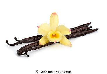 Vanilla pods with one yellow orchid. Isolated on white...
