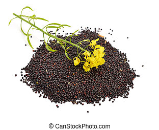 Rapeseed with flowers. Isolated.