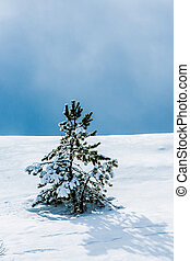 winter tree - tree in mountain