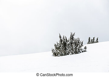 winter - tree in mountain covered by snow