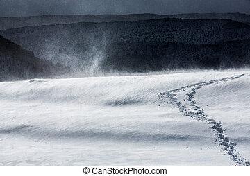 snowstorm2 - winter landscape