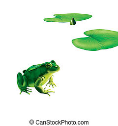 Green frog with spots, spotted toad, Water lily (lotus) leaves, illustration Isolated on white