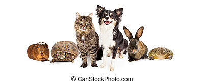 Happy and Smiling Group of Pets - A group of common...