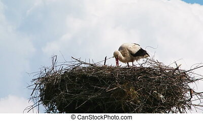 Lonely Stork Eating In The Nest - In the frame there is one...