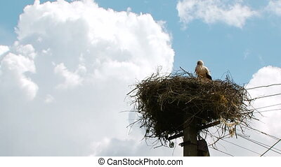 Lonely Stork Standing In The Nest Settled On Electric Pylon...