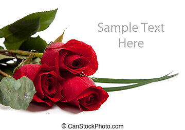 Red roses on a white background with copy space