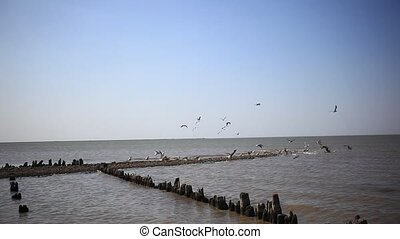 Seagull flock fly over the sea - seagull flock fly over the...