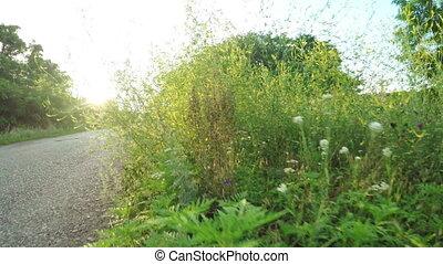 Wildflowers near road - In backlit sun by rocky road...