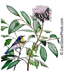 Northern Parula Zebra Swallowtail - Northern Parula - Parula...