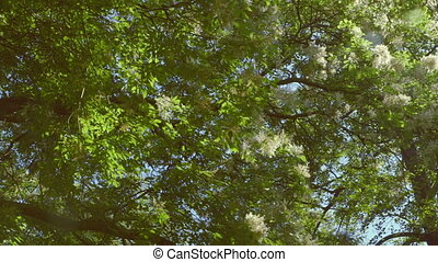 Nature - Branches full of fresh green leaves against blue...