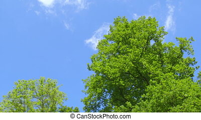 Nature - Trees - Branches full of Fresh Green Leaves - low...