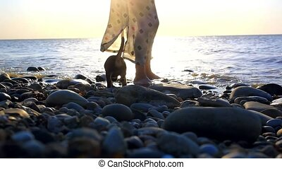 Puppy running near it owner legs in pebble beach during sunset