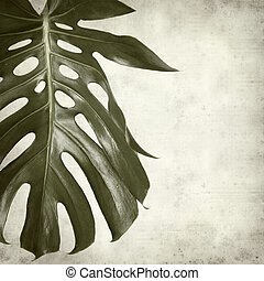 textured old paper background with monstera plant leaf