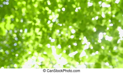 Nature Background with Sunbeams - Defocused abstract fresh...
