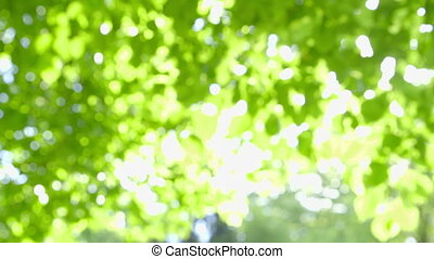 Abstract fresh green Leaves against the Sun with Sunbeams -...