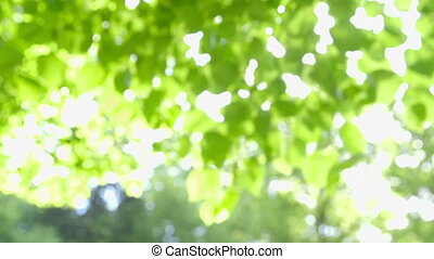 Beautiful Fresh Green Nature - Defocused abstract fresh...