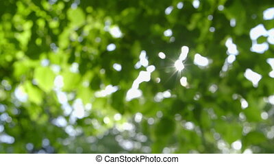 Nature - Defocused abstract fresh green Nature Background...