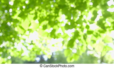 Nature - Abstract fresh green Leaves against the Sun with...